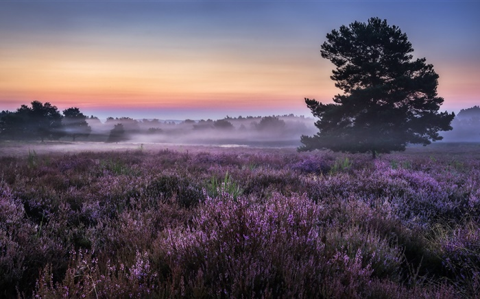 Morning, field, trees, flowers, fog Wallpapers Pictures Photos Images