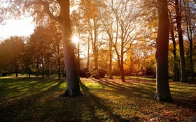 Park, trees, sunset, autumn, shadow HD wallpaper