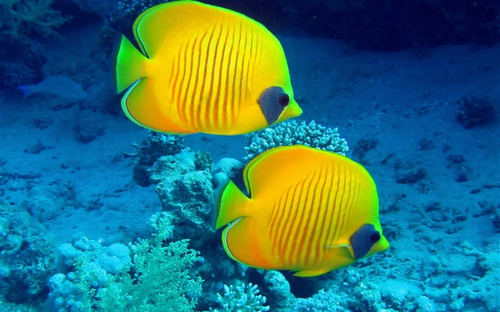 Underwater photography fish hd