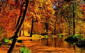 Autumn, pond, water, yellow leaves, trees HD wallpaper