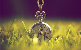 Clock in the grass, green, sunlight HD wallpaper