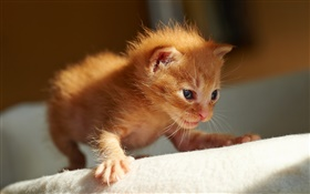 Cute little kitten, the first steps