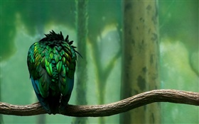 Green feathers bird rear view HD wallpaper