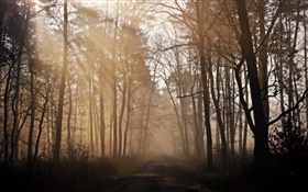 Morning, forest, trees, road, fog HD wallpaper