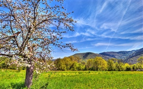 Mountains, tree, field, spring HD wallpaper