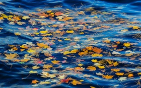 River, water, yellow leaves, autumn HD wallpaper