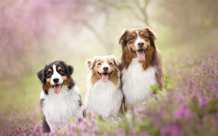Three dogs, flowers Wallpapers Pictures Photos Images