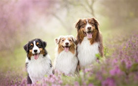Three dogs, flowers HD wallpaper