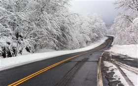 Winter, snow, road, trees, white HD wallpaper