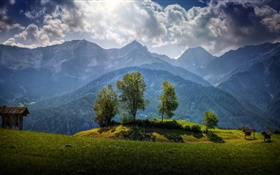 Austria, mountains, trees, clouds, grass HD wallpaper