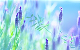 Blue flowers, violet, summer, blur background HD wallpaper