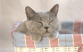 Cat sleeping, home HD wallpaper