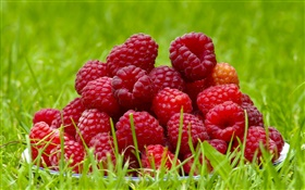 Fresh raspberries, red berries, grass, summer HD wallpaper