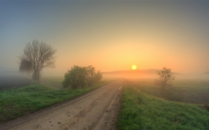 Morning, road, grass, trees, fog, sunrise Wallpapers Pictures Photos Images