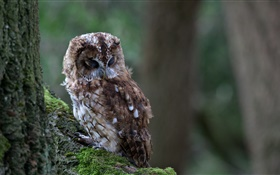 Owl sleep, bird close-up, tree, moss HD wallpaper