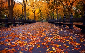 Park, autumn, bench, trees, leaves, path HD wallpaper