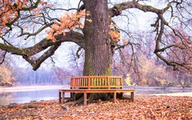 Park, big tree, bench, autumn HD wallpaper