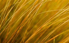 Plant close-up, yellow grass, autumn