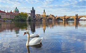 Prague, Czech Republic, Charles bridge, house, river Vltava, swans HD wallpaper