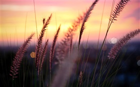 Sunset, red sky, grass, glare, contour HD wallpaper