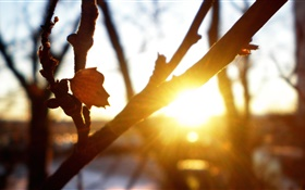 Tree, branches, leaves, sunset, sun rays, glare, autumn HD wallpaper