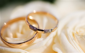 Wedding rings, rose petals HD wallpaper