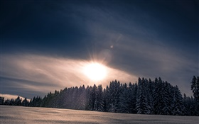 Winter, snow, forest, trees, sunset HD wallpaper