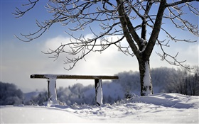 Winter, snow, tree, bench HD wallpaper