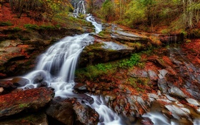 Autumn, forest, river, stream, waterfalls, leaves HD wallpaper