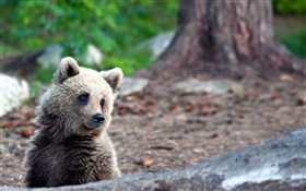 Bear in summer, bokeh HD wallpaper