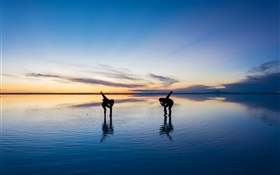 Beautiful nature, Uyuni Salt Lake, people dance, sunset, Japan HD wallpaper