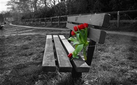 Black and white photo, bench, red tulip flowers HD wallpaper