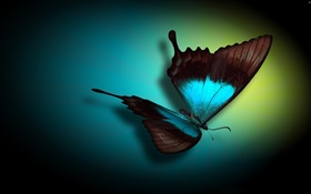 Butterfly close-up, blue, black, light HD wallpaper