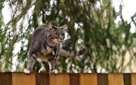 Cat standing at fence top, bokeh HD wallpaper