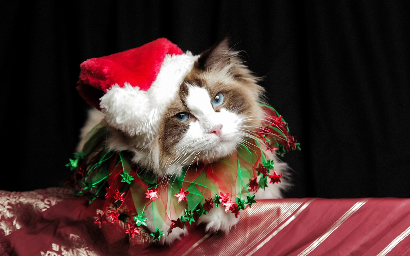 Christmas cat, hat 1440x900 wallpaper