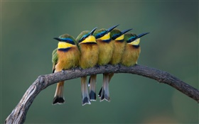 Five cute birds standing on the tree branch