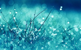 Grass, blue style, rain, water drops, glare HD wallpaper
