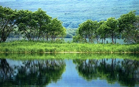Nature landscape, trees, green, river, water reflection HD wallpaper