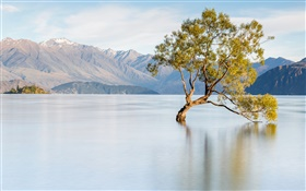 New Zealand, lake Wanaka, mountains, lonely tree HD wallpaper