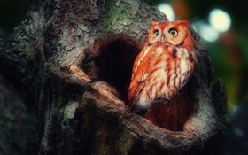 Owl in forest, hollow tree HD wallpaper