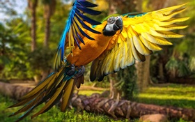 Parrot flight, wings HD wallpaper