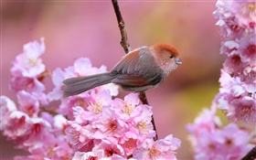 Pink flowers, bird, garden, spring HD wallpaper