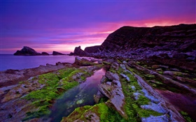 Sunset, sea, coast, stones, moss, purple sky HD wallpaper