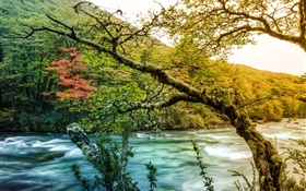 Trees, river, mountain, green moss