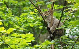 Wild cat sleeping in the tree, green leaves HD wallpaper