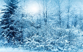 Winter, trees, spruce, white snow HD wallpaper