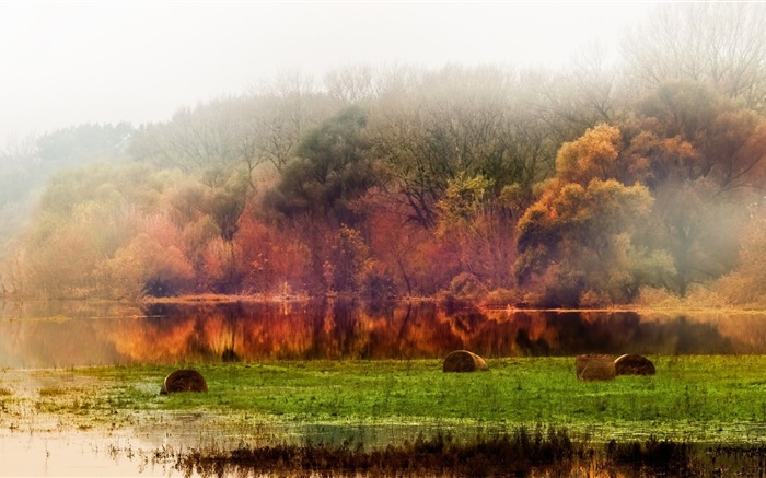 Autumn, forest, trees, pond, foliage, fog, morning Wallpapers Pictures Photos Images