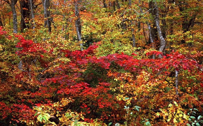 Autumn forest, twigs, red and yellow leaves Wallpapers Pictures Photos Images