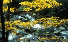 Autumn, nature scenery, yellow leaves, trees, creek HD wallpaper