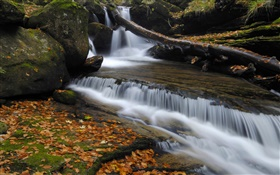 Autumn, red leaves, creek, stream HD wallpaper